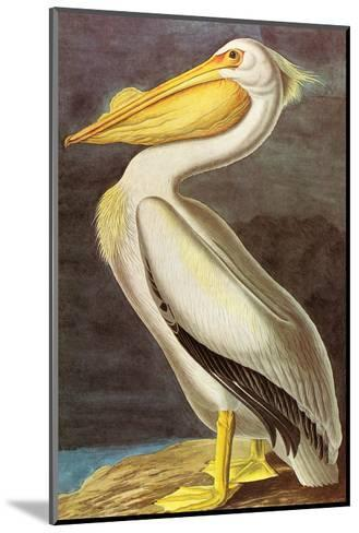 White Pelican-John James Audubon-Mounted Art Print