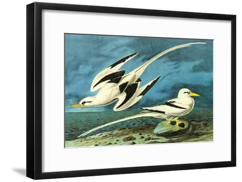 White-Tailed Tropic Bird-John James Audubon-Framed Art Print