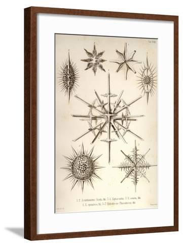 Acanthometra Sicula, Xiphacantha Types and Heliodiscus Phacodiscus-Ernst Haeckel-Framed Art Print