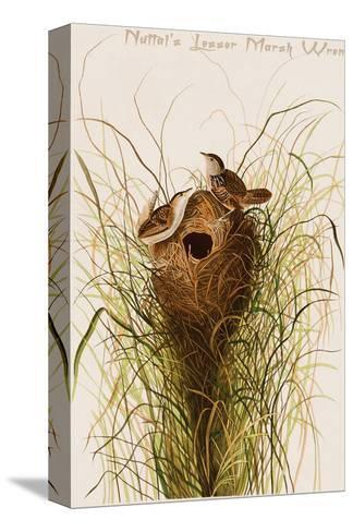 Nuttal's Lesser Marsh Wren-John James Audubon-Stretched Canvas Print