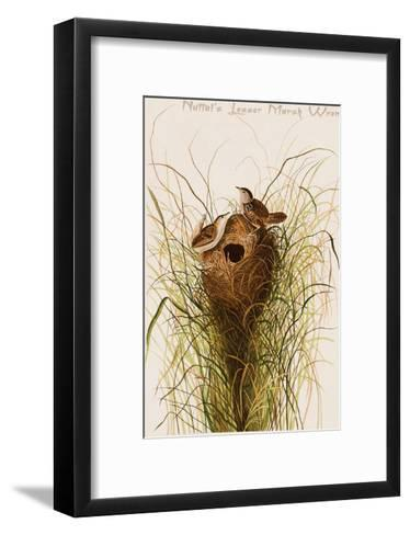 Nuttal's Lesser Marsh Wren-John James Audubon-Framed Art Print