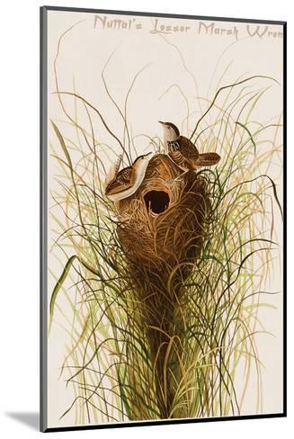 Nuttal's Lesser Marsh Wren-John James Audubon-Mounted Art Print