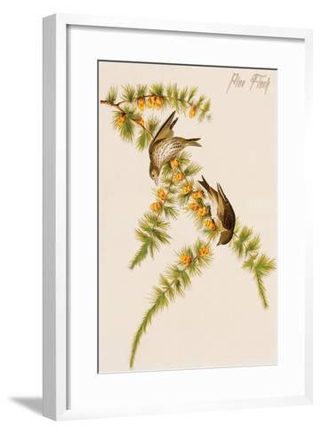 Pine Finch-John James Audubon-Framed Art Print