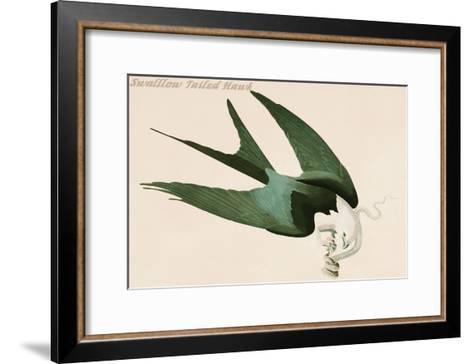 Swalllow Tailed Hawk-John James Audubon-Framed Art Print