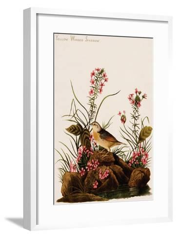 Yellow Winged Sparrow-John James Audubon-Framed Art Print