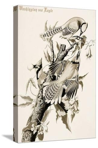Blue Jay-John James Audubon-Stretched Canvas Print
