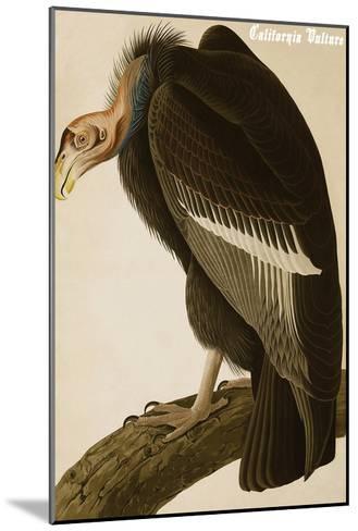 California Vulture-John James Audubon-Mounted Art Print