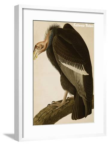 California Vulture-John James Audubon-Framed Art Print