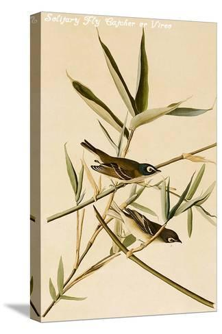 Solitary Fly Catcher or Vireo-John James Audubon-Stretched Canvas Print