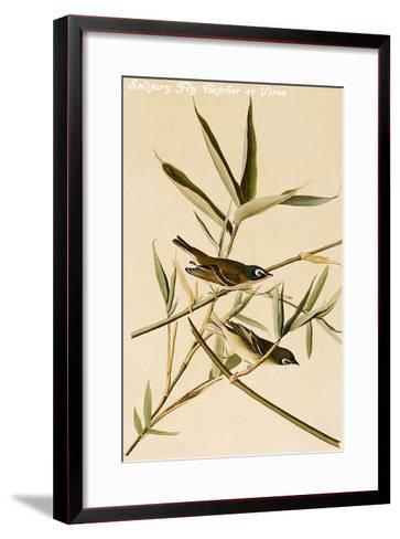 Solitary Fly Catcher or Vireo-John James Audubon-Framed Art Print