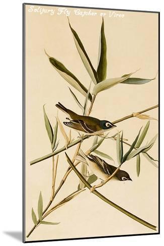 Solitary Fly Catcher or Vireo-John James Audubon-Mounted Art Print