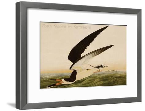 Black Skimmer or Shearwater-John James Audubon-Framed Art Print