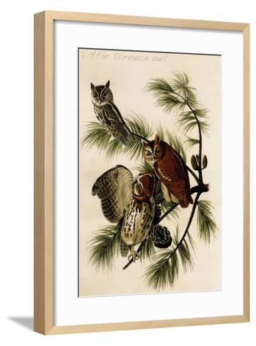 Little Screech Owl-John James Audubon-Framed Art Print