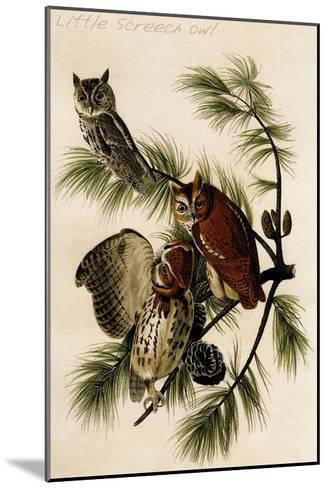 Little Screech Owl-John James Audubon-Mounted Art Print