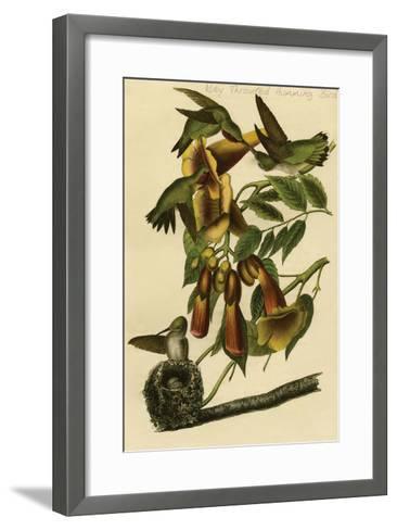 Ruby Throated Humming Bird-John James Audubon-Framed Art Print