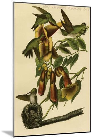 Ruby Throated Humming Bird-John James Audubon-Mounted Art Print