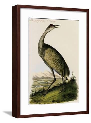 Whooping Crane-John James Audubon-Framed Art Print