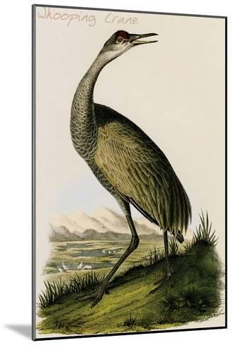 Whooping Crane-John James Audubon-Mounted Art Print