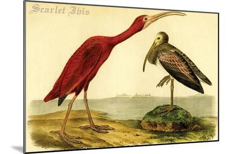Scarlet Ibis-John James Audubon-Mounted Art Print