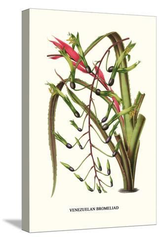 Venezuelan Bromeliad-Louis Van Houtte-Stretched Canvas Print
