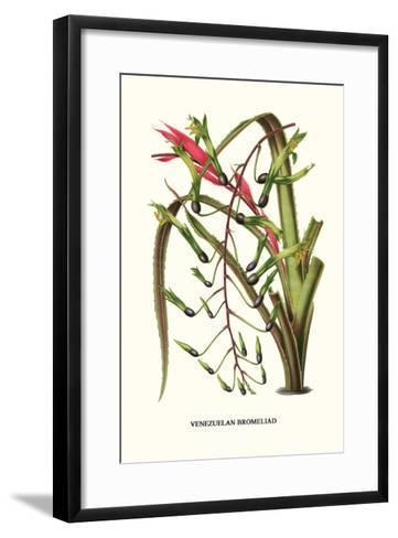 Venezuelan Bromeliad-Louis Van Houtte-Framed Art Print