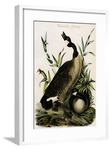Canada Goose-John James Audubon-Framed Art Print
