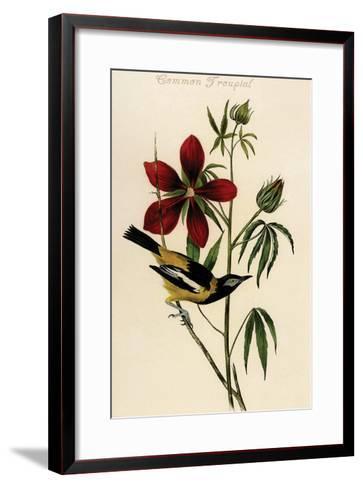 Common Troupial-John James Audubon-Framed Art Print
