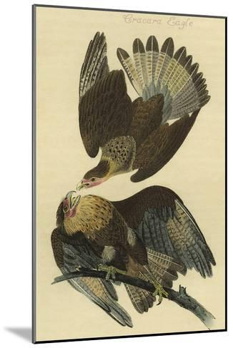 Cracara Eagle-John James Audubon-Mounted Art Print