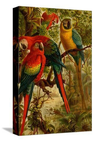 Macaws-F^W^ Kuhnert-Stretched Canvas Print