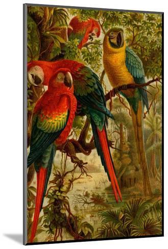 Macaws-F^W^ Kuhnert-Mounted Art Print