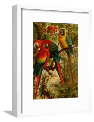 Macaws-F^W^ Kuhnert-Framed Art Print