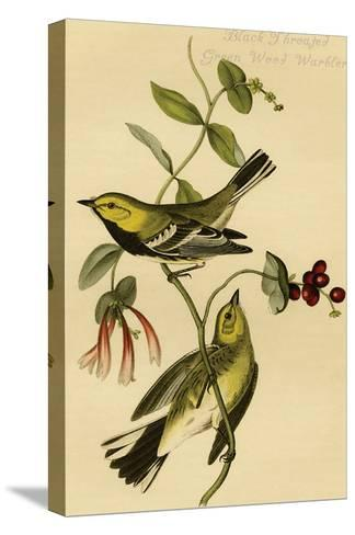 Black Throated Green Wood Warbler-John James Audubon-Stretched Canvas Print