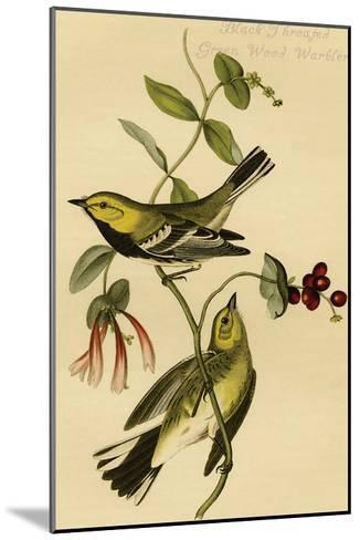 Black Throated Green Wood Warbler-John James Audubon-Mounted Art Print