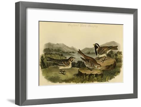Lapland Lark Bunting-John James Audubon-Framed Art Print