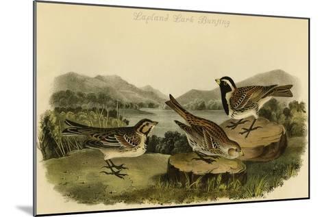 Lapland Lark Bunting-John James Audubon-Mounted Art Print
