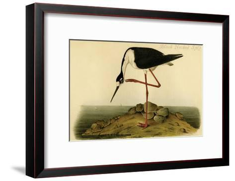 Black-necked Stilt-John James Audubon-Framed Art Print