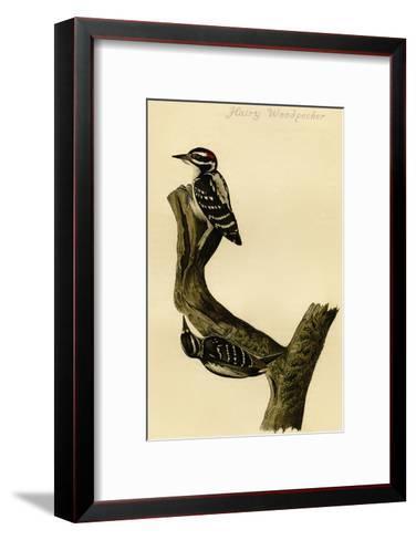 Hairy Woodpecker-John James Audubon-Framed Art Print