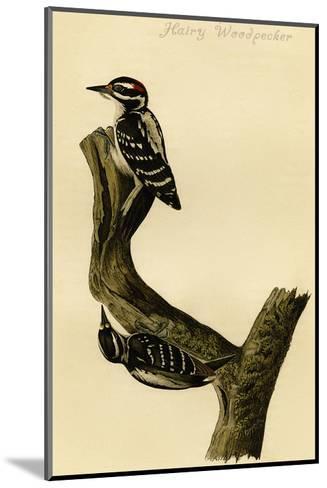 Hairy Woodpecker-John James Audubon-Mounted Art Print