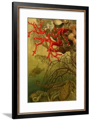 Coral-F^W^ Kuhnert-Framed Art Print