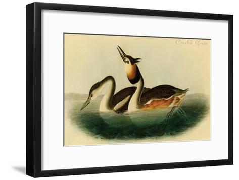 Crested Grebe-John James Audubon-Framed Art Print
