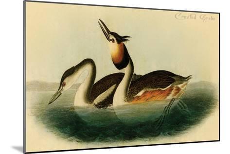Crested Grebe-John James Audubon-Mounted Art Print