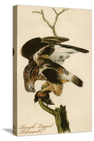 Rough Legged Buzzard-John James Audubon-Stretched Canvas Print