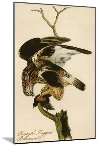 Rough Legged Buzzard-John James Audubon-Mounted Art Print