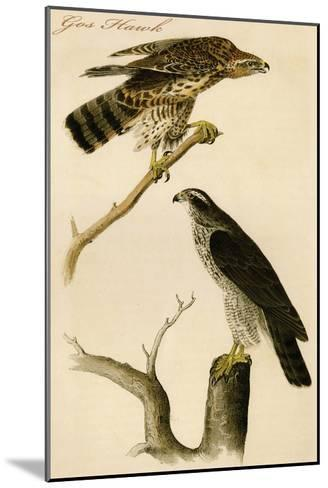 Gos Hawk-John James Audubon-Mounted Art Print