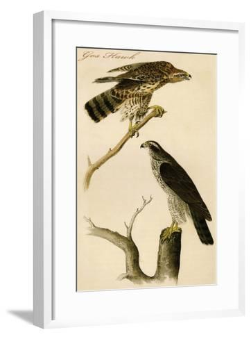 Gos Hawk-John James Audubon-Framed Art Print