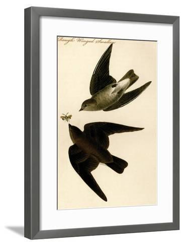 Rough Winged Swallow-John James Audubon-Framed Art Print