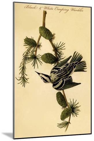 Black and White Creeping Warbler-John James Audubon-Mounted Art Print