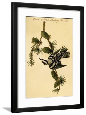 Black and White Creeping Warbler-John James Audubon-Framed Art Print