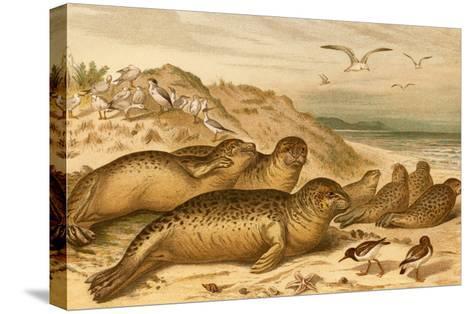 Seals-F^W^ Kuhnert-Stretched Canvas Print