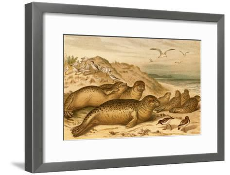 Seals-F^W^ Kuhnert-Framed Art Print